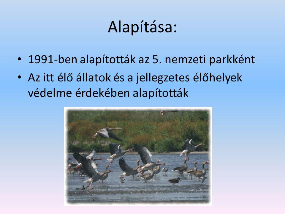 A nemzeti park jelképe A Fertő-Hanság Nemzeti Park jelképe a nagykócsag Ez egy nagy termetű, védett, csoportokban élő gázlómadár