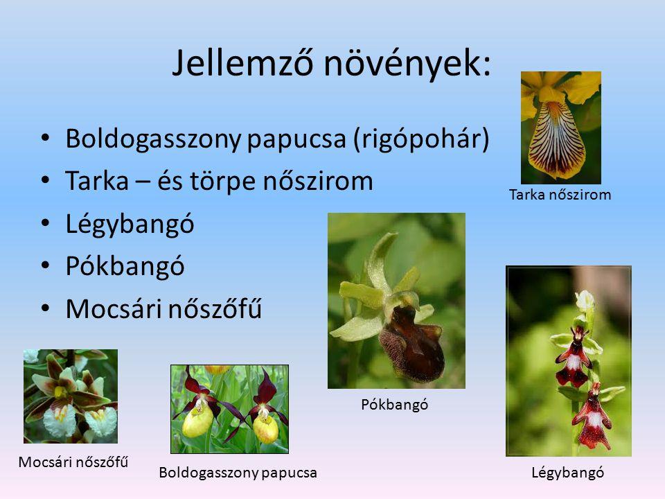 Jellemző növények: Boldogasszony papucsa (rigópohár) Tarka – és törpe nőszirom Légybangó Pókbangó Mocsári nőszőfű Tarka nőszirom Légybangó Pókbangó Mo