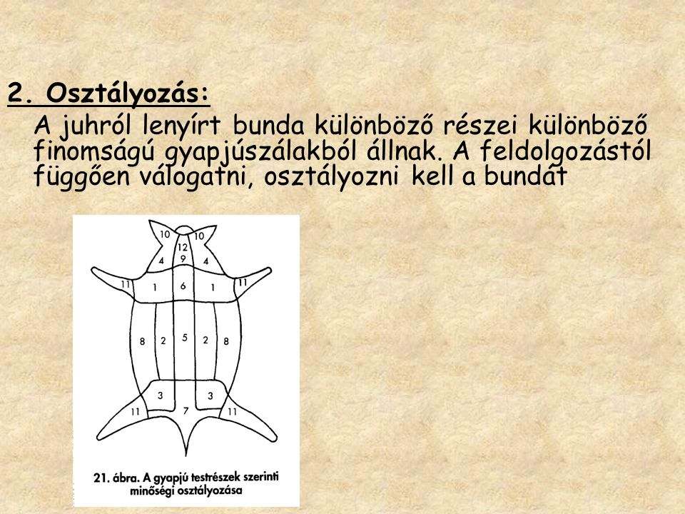 2. Osztályozás: A juhról lenyírt bunda különböző részei különböző finomságú gyapjúszálakból állnak. A feldolgozástól függően válogatni, osztályozni ke