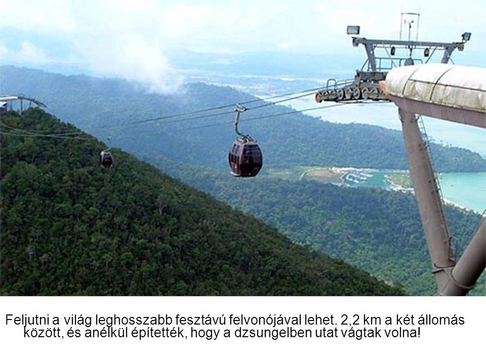 Feljutni a világ leghosszabb fesztávú felvonójával lehet. 2,2 km a két állomás között, és anélkül építették, hogy a dzsungelben utat vágtak volna!