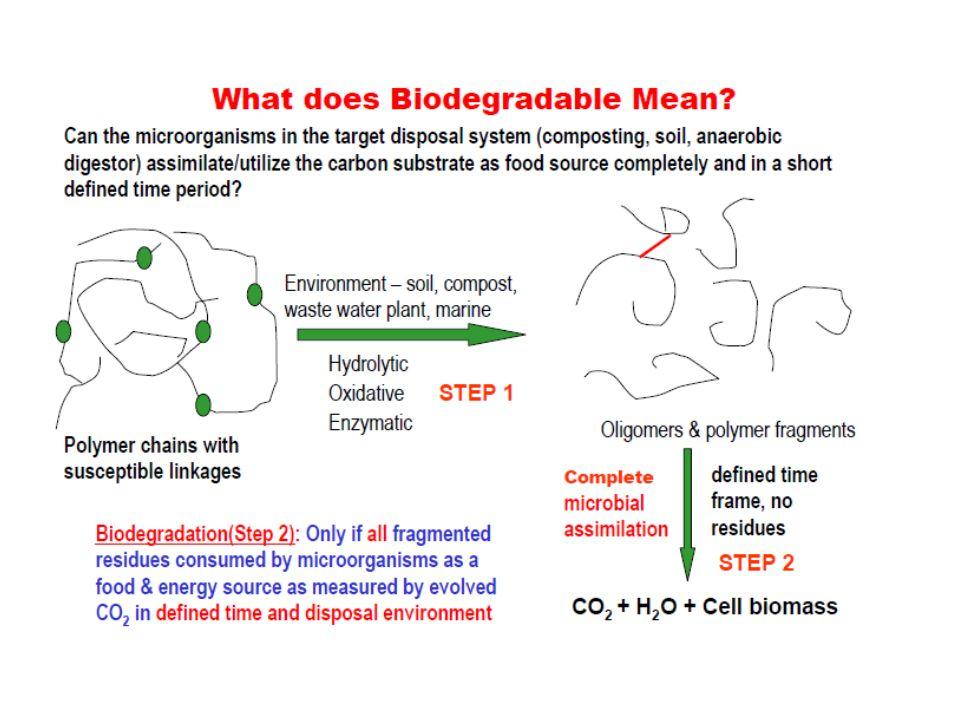 BIODEGRADÁCIÓ ENZIMATIKUS DEGRADÁCIÓ KOMBINÁCIÓHIDROLÍZIS TÖMB ERÓZIÓ FELÜLETI ERÓZIÓ A Biodegradábilis Polimerek Bomlása Degradáció ----- Lánc hasadás Erózió ------- Tömegvesztés Degradation in two Phases Water penetration (Rate Determing) Attacking Chemical bonds Shorter water soluble fragments Rapid loss of polymer Enzymatic attack Solubilisation