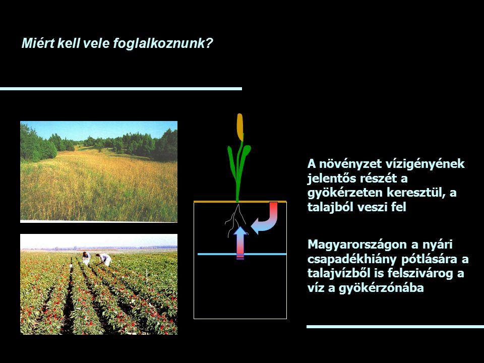 Miért kell vele foglalkoznunk? A növényzet vízigényének jelentős részét a gyökérzeten keresztül, a talajból veszi fel Magyarországon a nyári csapadékh