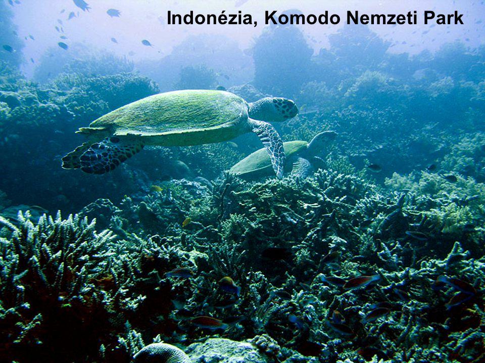Indonesia s Komodo national park. Indonézia, Komodo Nemzeti Park