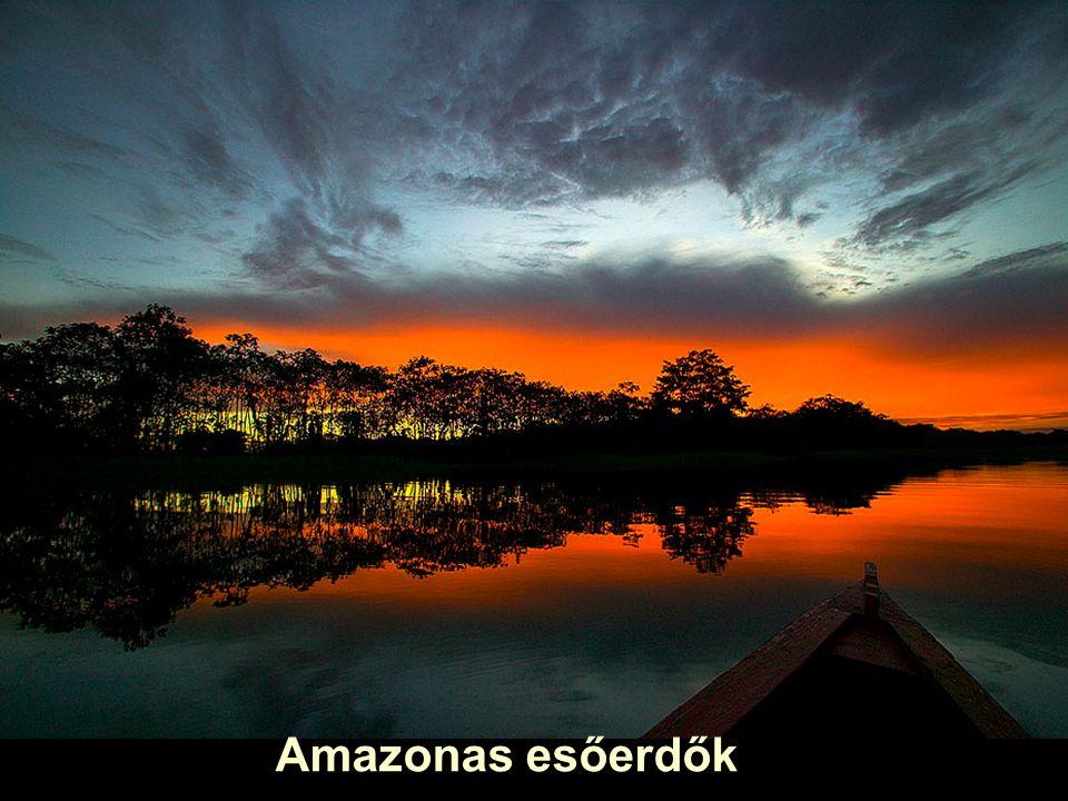 Dél Amerikai Amazonas esőerdők