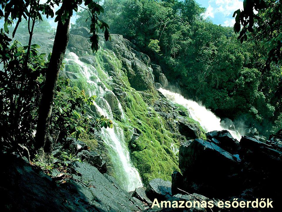 Amazonas esőerdők