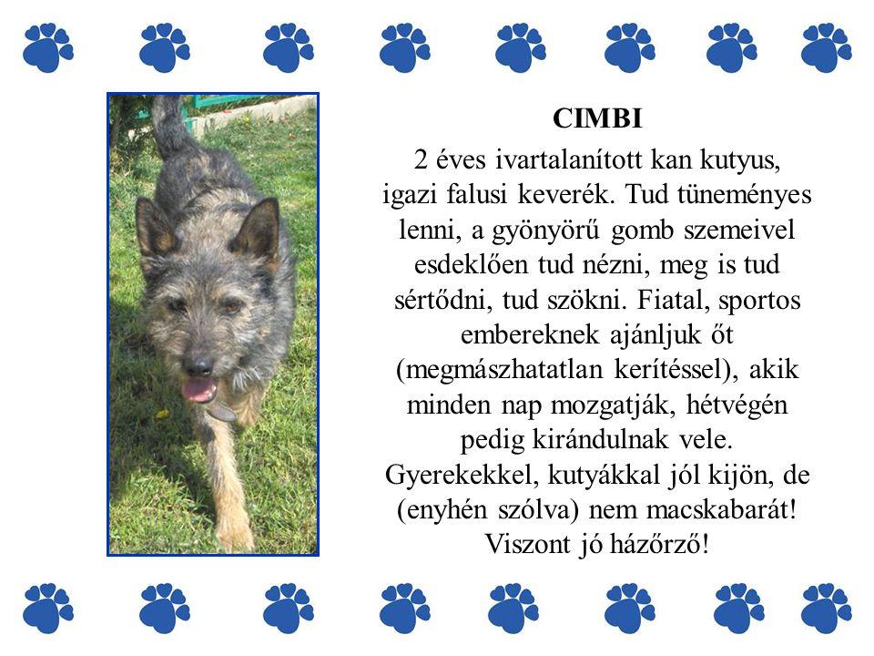 CIMBI 2 éves ivartalanított kan kutyus, igazi falusi keverék.