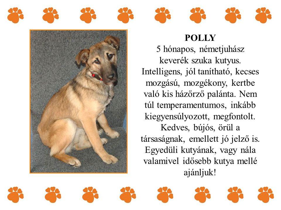 POLLY 5 hónapos, németjuhász keverék szuka kutyus.