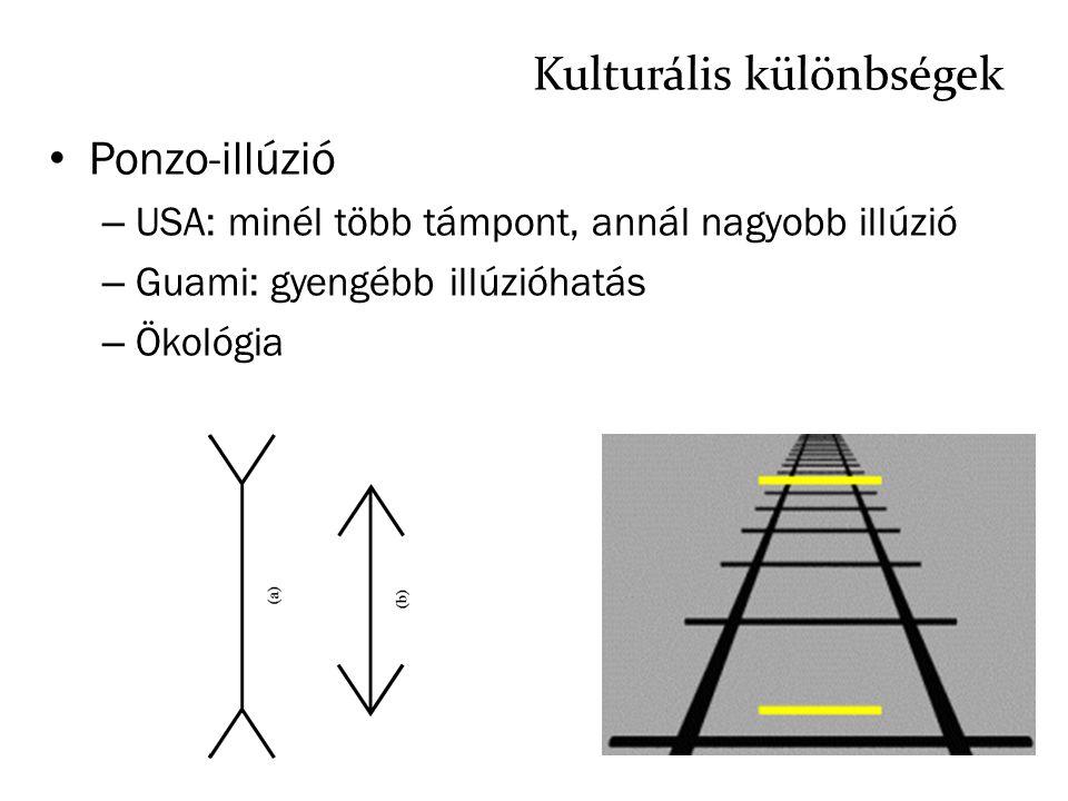 Kulturális különbségek Ponzo-illúzió – USA: minél több támpont, annál nagyobb illúzió – Guami: gyengébb illúzióhatás – Ökológia