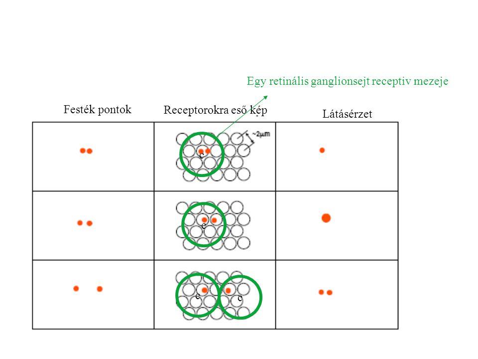 c Egy retinális ganglionsejt receptiv mezeje c c c Festék pontok Receptorokra eső kép Látásérzet