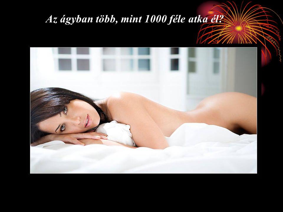 Az ágyban több, mint 1000 féle atka él?