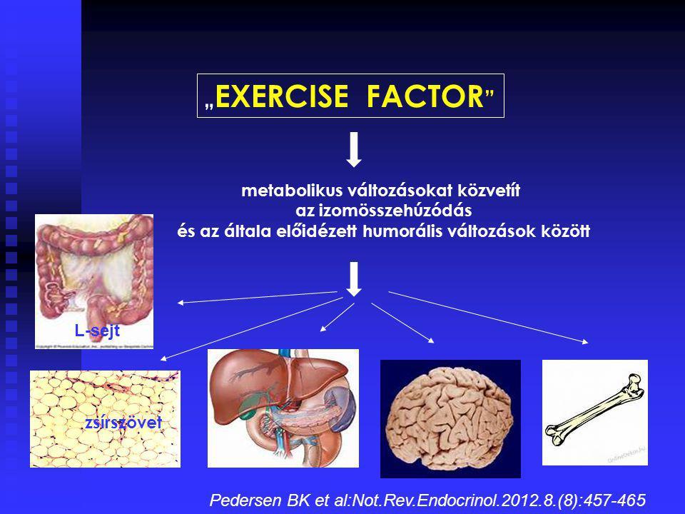 """metabolikus változásokat közvetít az izomösszehúzódás és az általa előidézett humorális változások között """" EXERCISE FACTOR """" zsírszövet L-sejt Peders"""