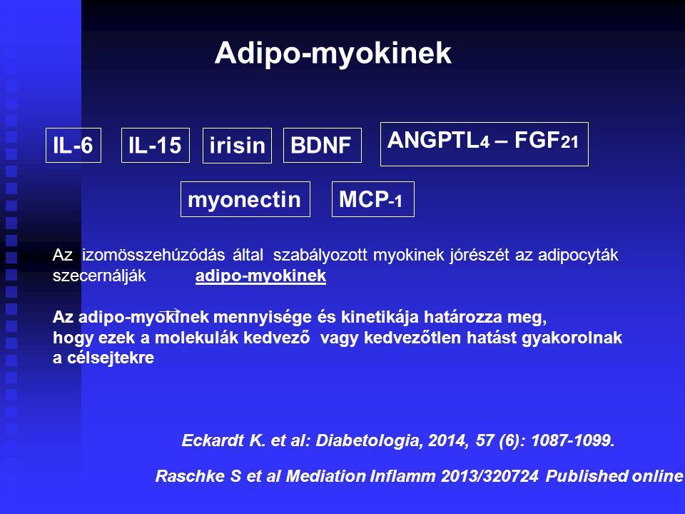 Adipo-myokinek IL-6IL-15irisinBDNF ANGPTL 4 – FGF 21 myonectinMCP -1 Az izomösszehúzódás által szabályozott myokinek jórészét az adipocyták szecernálják adipo-myokinek Az adipo-myokinek mennyisége és kinetikája határozza meg, hogy ezek a molekulák kedvező vagy kedvezőtlen hatást gyakorolnak a célsejtekre Eckardt K.