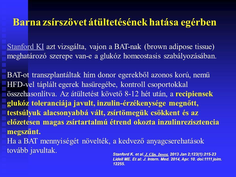 Stanford KIStanford KI azt vizsgálta, vajon a BAT-nak (brown adipose tissue) meghatározó szerepe van-e a glukóz homeostasis szabályozásában. BAT-ot tr