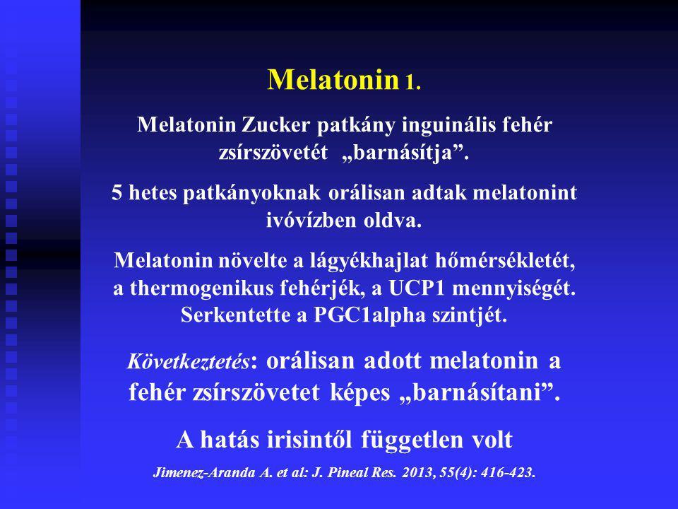"""Melatonin 1. Melatonin Zucker patkány inguinális fehér zsírszövetét """"barnásítja"""". 5 hetes patkányoknak orálisan adtak melatonint ivóvízben oldva. Mela"""