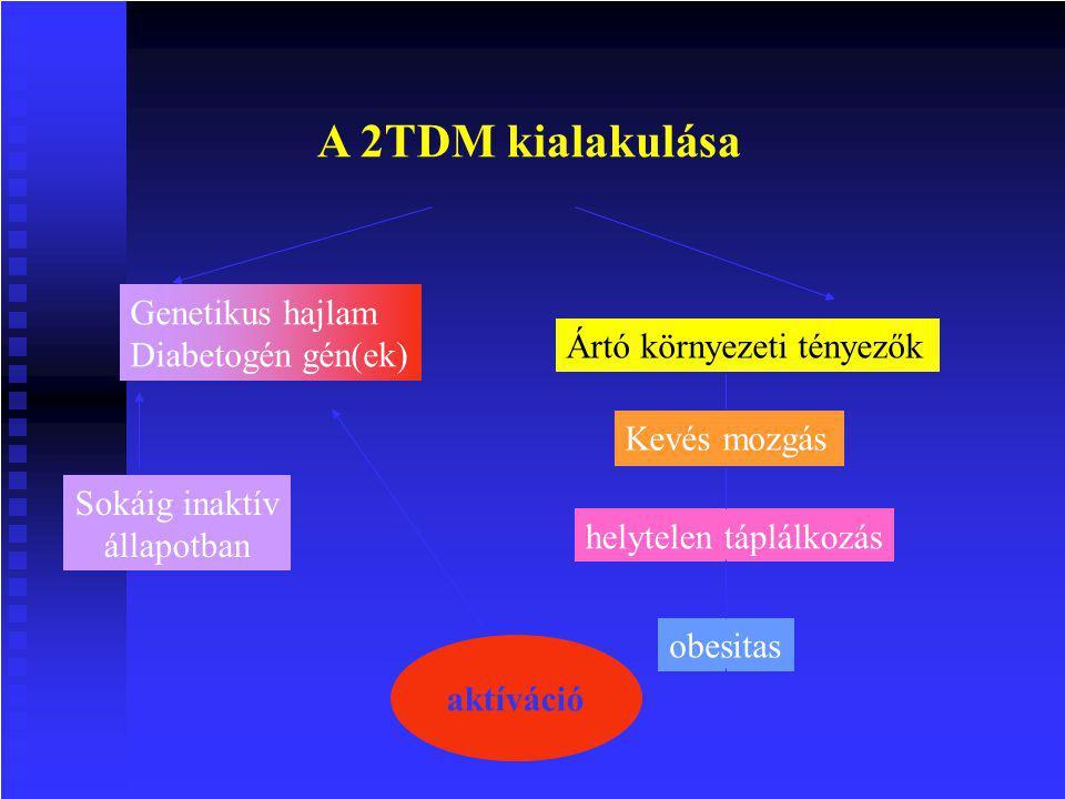 A 2TDM kialakulása Sokáig inaktív állapotban Ártó környezeti tényezők Kevés mozgás helytelen táplálkozás obesitas aktíváció Genetikus hajlam Diabetogén gén(ek)