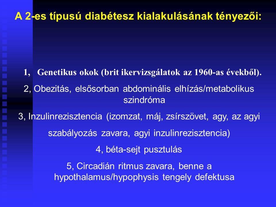 A 2-es típusú diabétesz kialakulásának tényezői: 1, Genetikus okok (brit ikervizsgálatok az 1960-as évekből). 2, Obezitás, elsősorban abdominális elhí