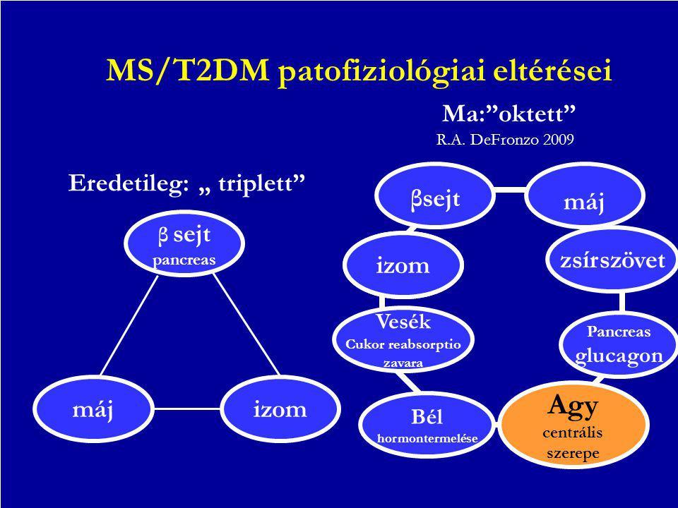 """MS/T2DM patofiziológiai eltérései Eredetileg: """" triplett"""" Ma:""""oktett"""" β sejt pancreas májizom βsejt máj zsírszövet Vesék Cukor reabsorptio zavara Bél"""