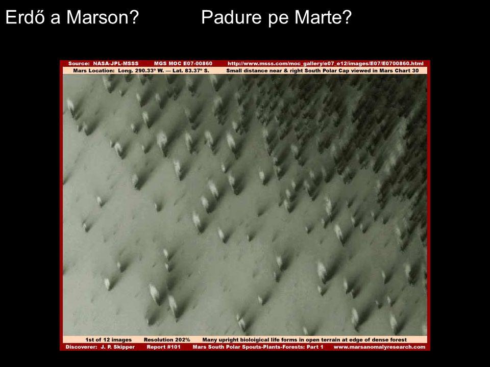 Erdő a Marson Padure pe Marte