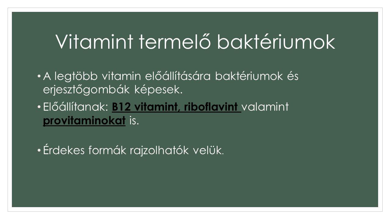 Vitamint termelő baktériumok A legtöbb vitamin előállítására baktériumok és erjesztőgombák képesek.