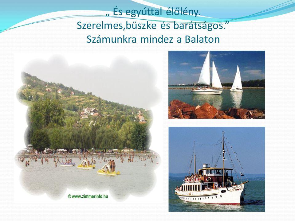 """"""" És egyúttal élőlény. Szerelmes,büszke és barátságos."""" Számunkra mindez a Balaton"""