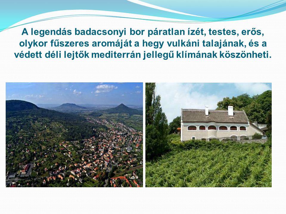 A legendás badacsonyi bor páratlan ízét, testes, erős, olykor fűszeres aromáját a hegy vulkáni talajának, és a védett déli lejtők mediterrán jellegű k