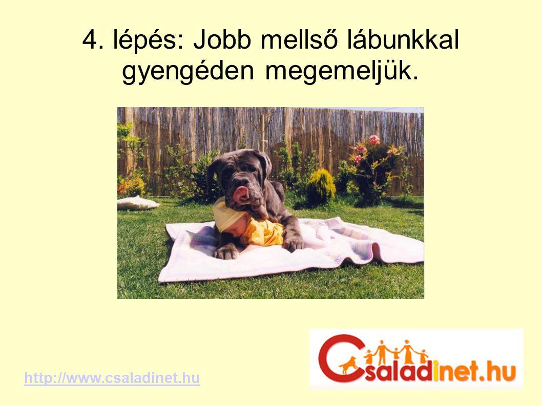 4. lépés: Jobb mellső lábunkkal gyengéden megemeljük. http://www.csaladinet.hu