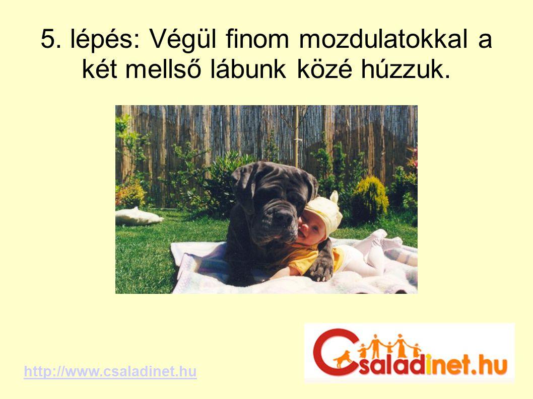 5. lépés: Végül finom mozdulatokkal a két mellső lábunk közé húzzuk. http://www.csaladinet.hu