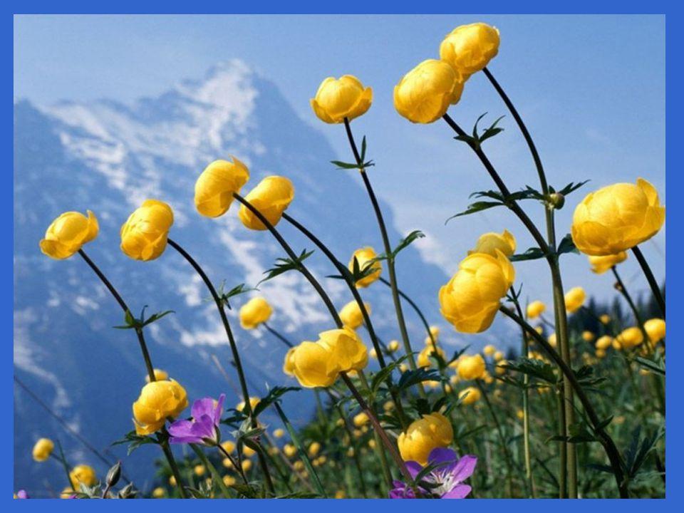 Áprily Lajos: Mennék eléd c. verse tavaszi képekre Zene: David Anthony: Zöld Föld, kék ég