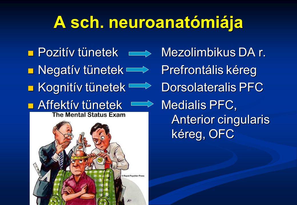 A sch. neuroanatómiája Pozitív tünetek Pozitív tünetek Negatív tünetek Negatív tünetek Kognitív tünetek Kognitív tünetek Affektív tünetek Affektív tün