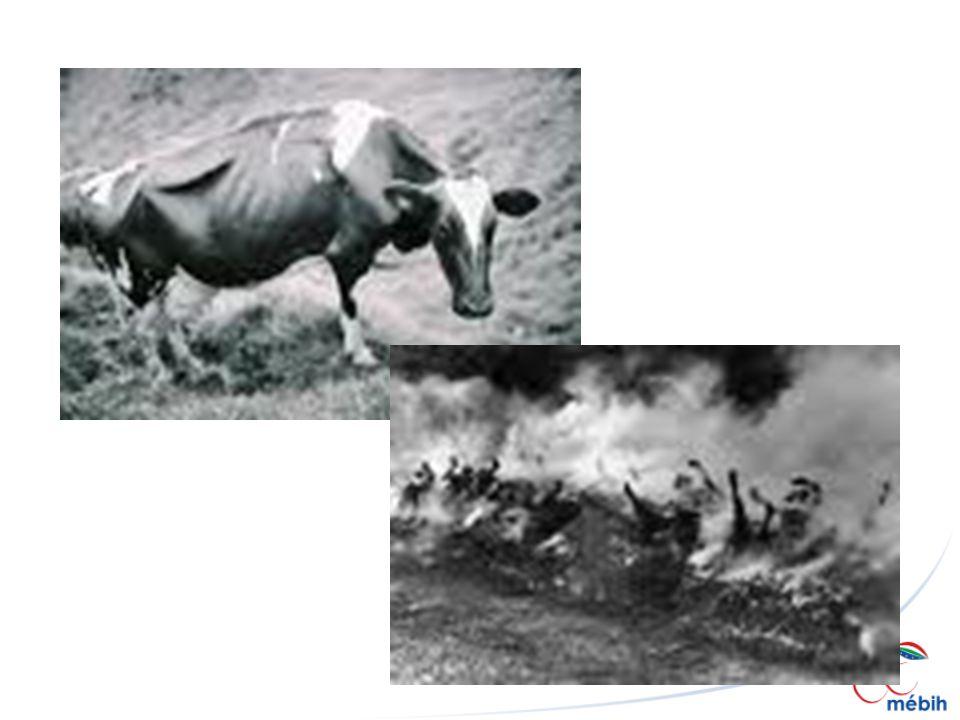 Intézkedések BSE teszt minden egyes vágásra kerülő szarvasmarhánál SRM eltávolítása Hús és csontliszt felhasználásának tilalma Kérődző állatok hulladékának szigorított feldolgozása (133 ºC/3 bar/20 perc) Fertőzött állat + leszármazottja + az egész állomány kiirtása Élelmiszerbiztonsági intézményrendszer átalakítása (EFSA, DG SANCO, MÉBiH…) EU: Egészségügyi és fogyasztóvédelmi főbizottsághoz kerül át az élelmiszerbiztonság ügye