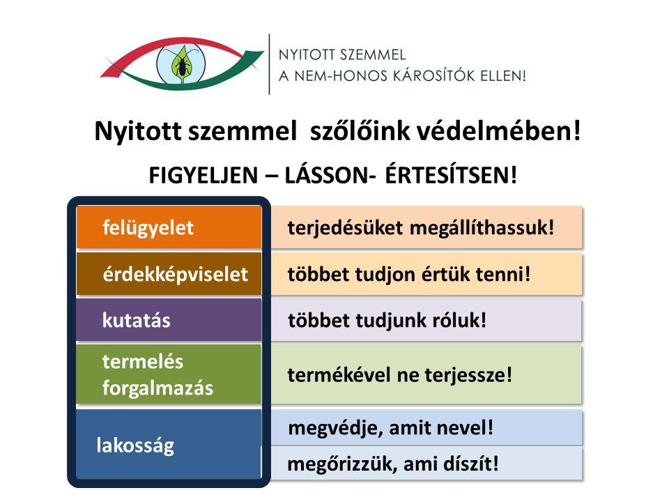 Nyitott szemmel szőlőink védelmében! FIGYELJEN – LÁSSON- ÉRTESÍTSEN! lakosság megvédje, amit nevel! megőrizzük, ami díszít! termelés forgalmazás terme