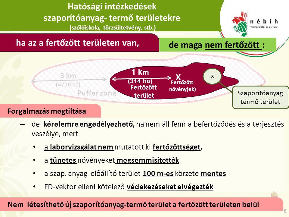 Hatósági intézkedések szaporítóanyag- termő területekre (szőlőiskola, törzsültetvény, stb.) – de kérelemre engedélyezhető, ha nem áll fenn a befertőző