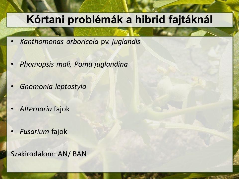 Kórtani problémák a hibrid fajtáknál Xanthomonas arboricola pv. juglandis Phomopsis mali, Poma juglandina Gnomonia leptostyla Alternaria fajok Fusariu