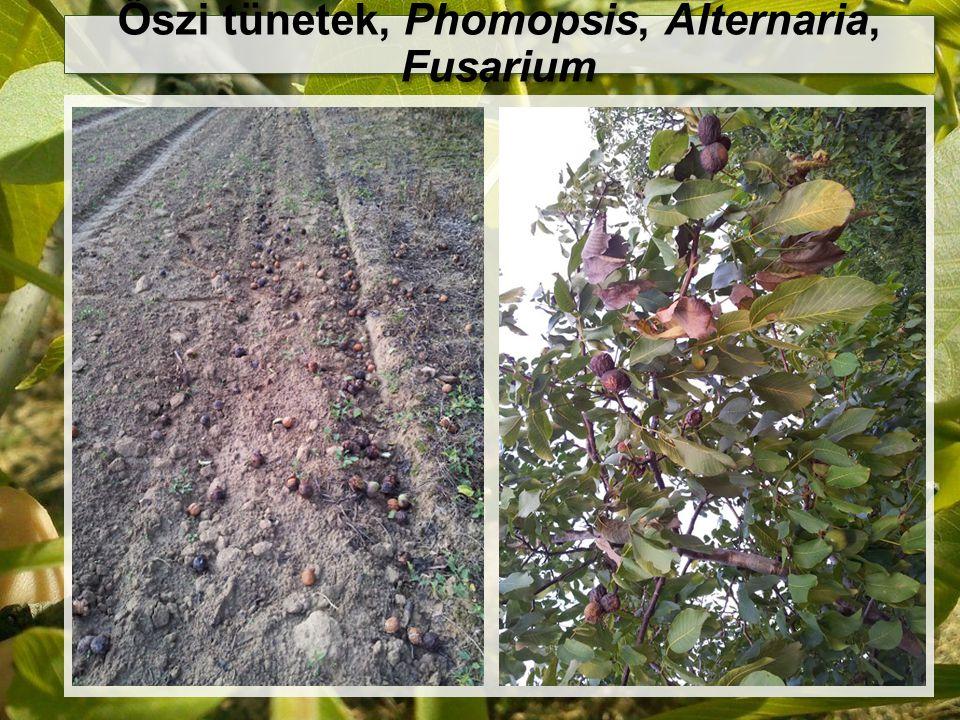 Őszi tünetek, Phomopsis, Alternaria, Fusarium