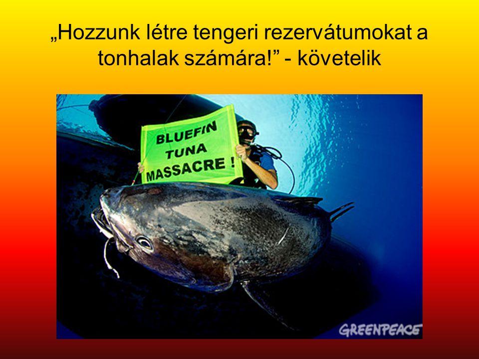 """""""Hozzunk létre tengeri rezervátumokat a tonhalak számára! - követelik"""