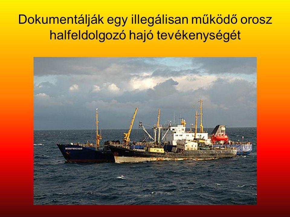 Dokumentálják egy illegálisan működő orosz halfeldolgozó hajó tevékenységét