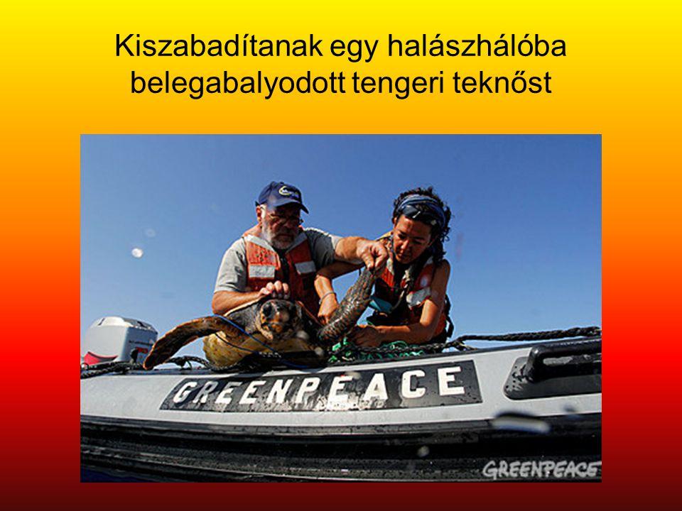 Kiszabadítanak egy halászhálóba belegabalyodott tengeri teknőst