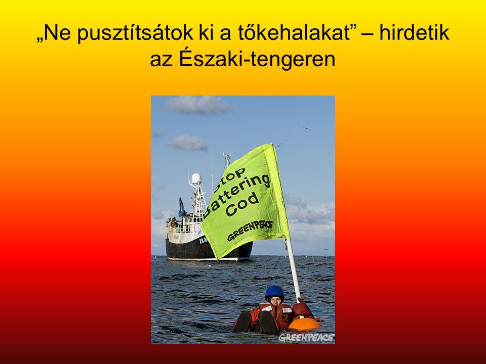 """""""Ne pusztítsátok ki a tőkehalakat"""" – hirdetik az Északi-tengeren"""
