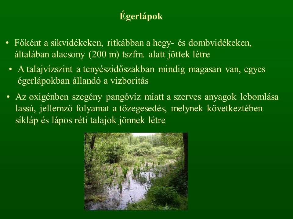Égerlápok Főként a síkvidékeken, ritkábban a hegy- és dombvidékeken, általában alacsony (200 m) tszfm.