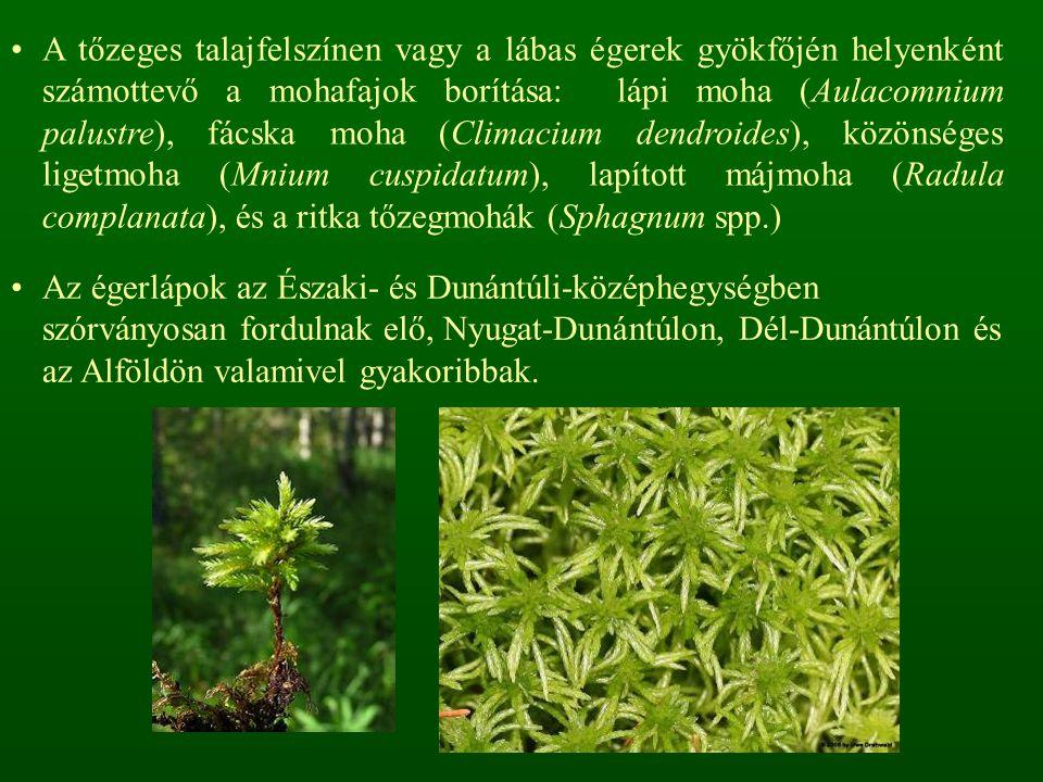 A tőzeges talajfelszínen vagy a lábas égerek gyökfőjén helyenként számottevő a mohafajok borítása: lápi moha (Aulacomnium palustre), fácska moha (Climacium dendroides), közönséges ligetmoha (Mnium cuspidatum), lapított májmoha (Radula complanata), és a ritka tőzegmohák (Sphagnum spp.) Az égerlápok az Északi- és Dunántúli-középhegységben szórványosan fordulnak elő, Nyugat-Dunántúlon, Dél-Dunántúlon és az Alföldön valamivel gyakoribbak.