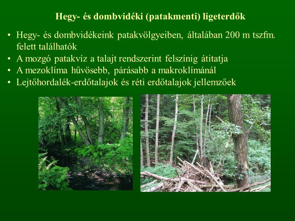 Hegy- és dombvidéki (patakmenti) ligeterdők Hegy- és dombvidékeink patakvölgyeiben, általában 200 m tszfm.