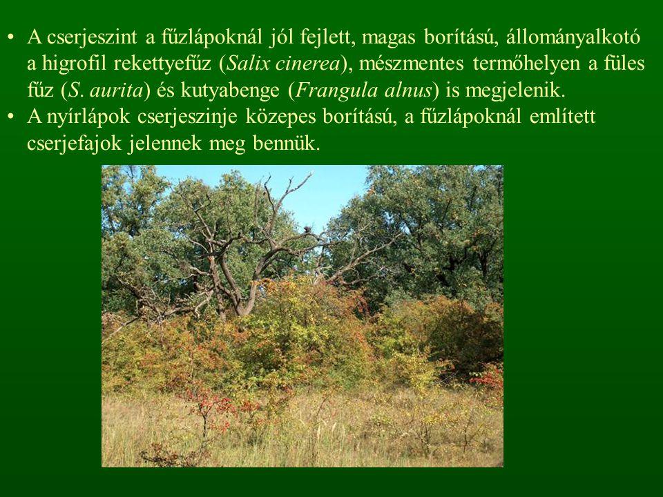 A cserjeszint a fűzlápoknál jól fejlett, magas borítású, állományalkotó a higrofil rekettyefűz (Salix cinerea), mészmentes termőhelyen a füles fűz (S.