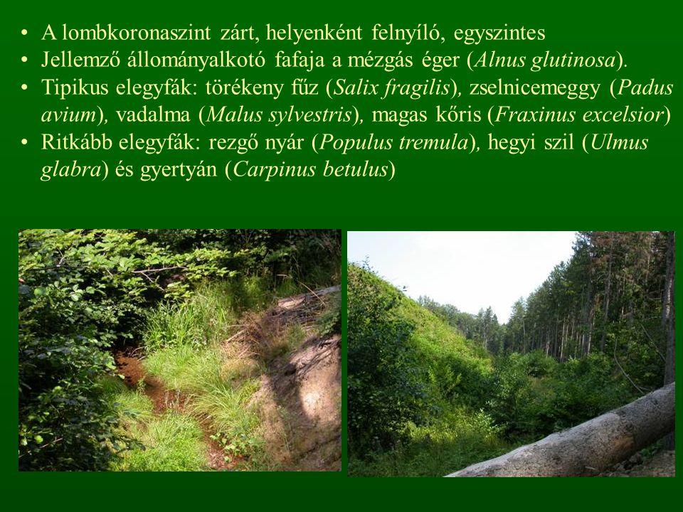 A cserjeszint alacsony, néha közepes borítású, higrofil, mezohigrofil cserjék alkotják: kutyabenge (Frangula alnus), kányabangita (Viburnum opulus), fekete bodza (Sambucus nigra), vörösgyűrűsom (Cornus sanguinea), vörös ribiszke (Ribes rubrum), farkasboroszlán (Daphne mezereum), hamvas szeder (Rubus caesius)