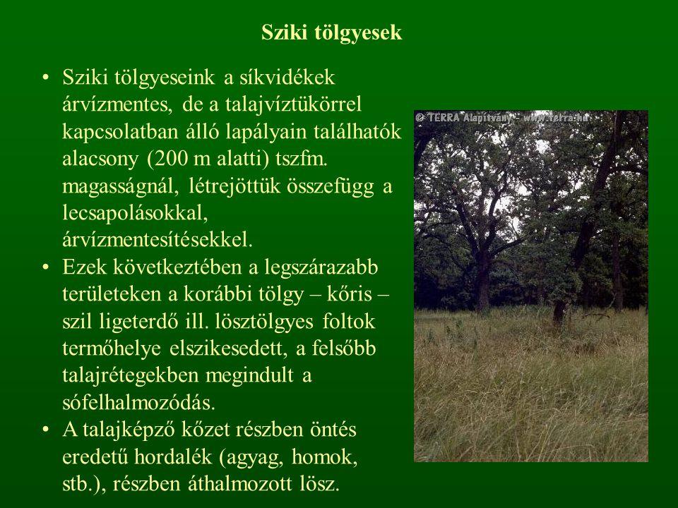 Sziki tölgyesek Sziki tölgyeseink a síkvidékek árvízmentes, de a talajvíztükörrel kapcsolatban álló lapályain találhatók alacsony (200 m alatti) tszfm.