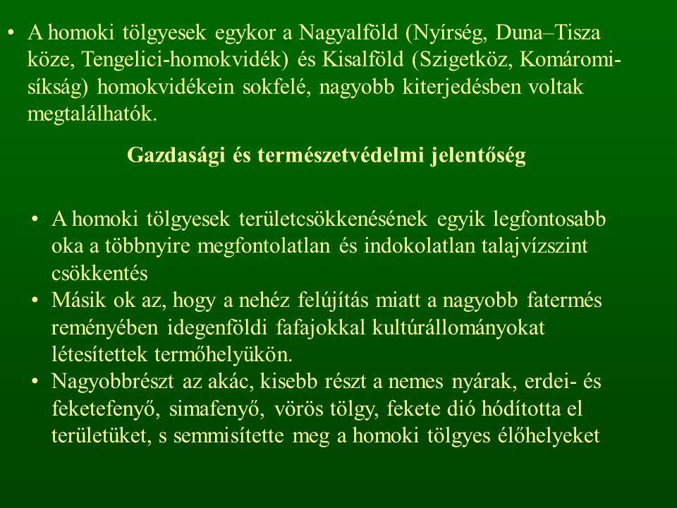 A homoki tölgyesek egykor a Nagyalföld (Nyírség, Duna–Tisza köze, Tengelici-homokvidék) és Kisalföld (Szigetköz, Komáromi- síkság) homokvidékein sokfelé, nagyobb kiterjedésben voltak megtalálhatók.