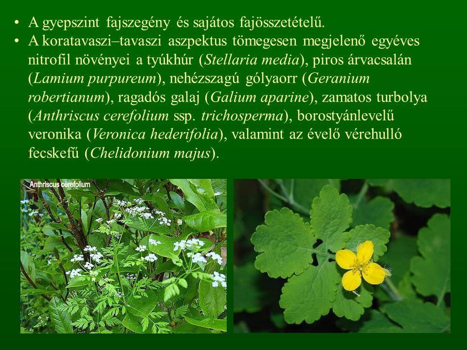 A gyepszint fajszegény és sajátos fajösszetételű.