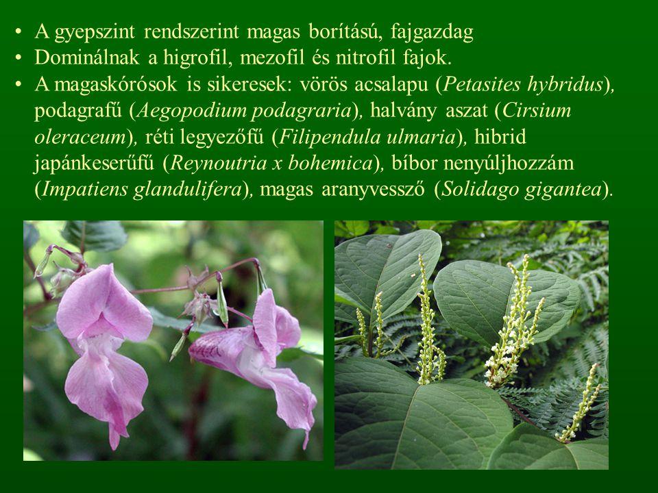 A harasztok közül az óriás zsurló (Equisetum maximum), erdei zsurló (E.