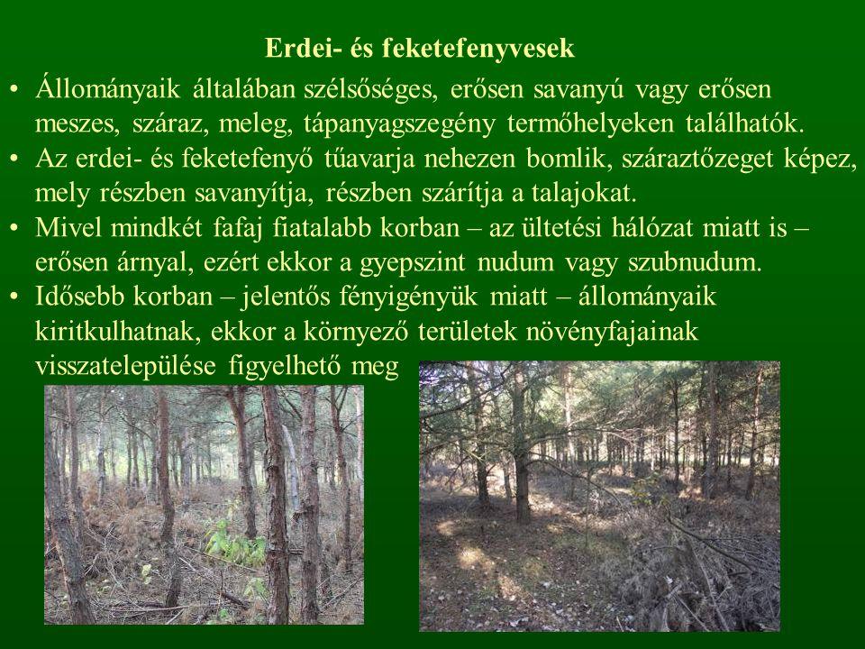 Erdei- és feketefenyvesek Állományaik általában szélsőséges, erősen savanyú vagy erősen meszes, száraz, meleg, tápanyagszegény termőhelyeken találhatók.