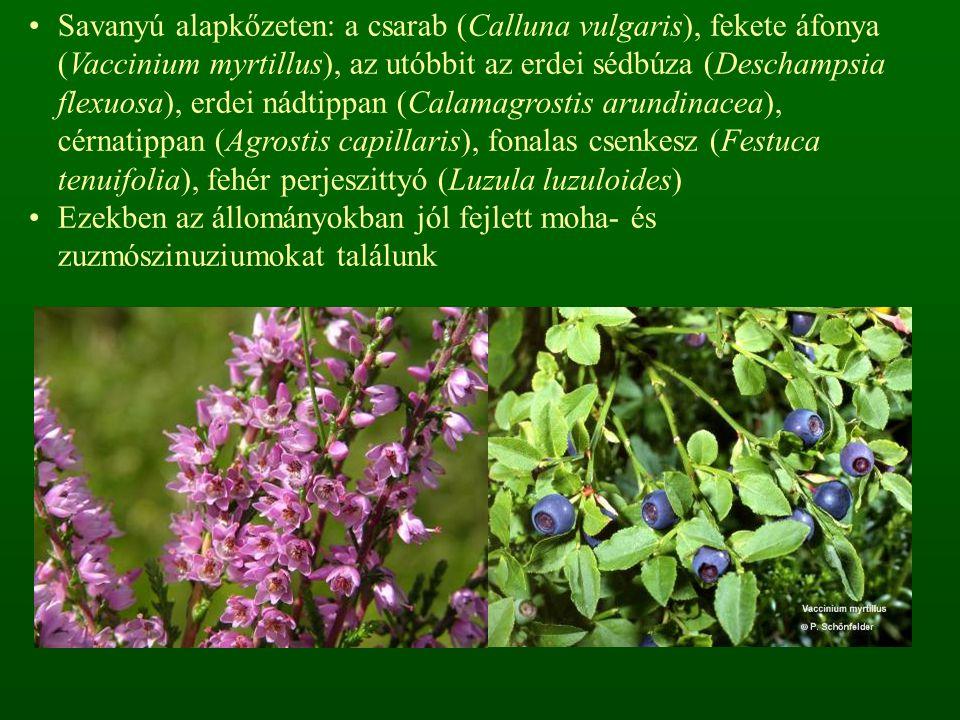 Savanyú alapkőzeten: a csarab (Calluna vulgaris), fekete áfonya (Vaccinium myrtillus), az utóbbit az erdei sédbúza (Deschampsia flexuosa), erdei nádtippan (Calamagrostis arundinacea), cérnatippan (Agrostis capillaris), fonalas csenkesz (Festuca tenuifolia), fehér perjeszittyó (Luzula luzuloides) Ezekben az állományokban jól fejlett moha- és zuzmószinuziumokat találunk
