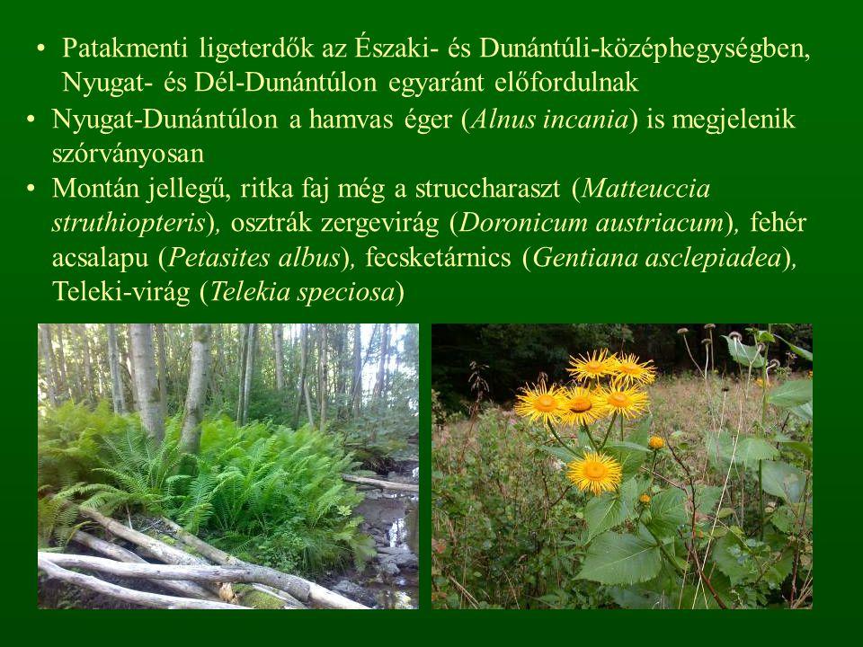Patakmenti ligeterdők az Északi- és Dunántúli-középhegységben, Nyugat- és Dél-Dunántúlon egyaránt előfordulnak Nyugat-Dunántúlon a hamvas éger (Alnus incania) is megjelenik szórványosan Montán jellegű, ritka faj még a struccharaszt (Matteuccia struthiopteris), osztrák zergevirág (Doronicum austriacum), fehér acsalapu (Petasites albus), fecsketárnics (Gentiana asclepiadea), Teleki-virág (Telekia speciosa)